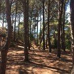 Foto de Camping Pola