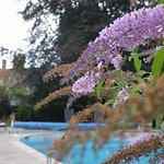 The Mediterrainian touch, buddleia and pool