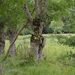 sculture naturelle du marais