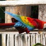 Photo de Amazon Village Jungle Lodge