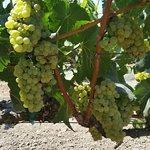 Foto di O'Brien Estate Winery