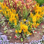 Annapolis Royal Historic Gardens Foto