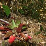 Foto de Dantica Cloud Forest Lodge