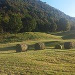 Agriturismo Malga Riondera Foto