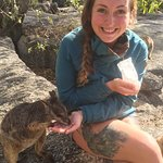 Demi feeding rock wallaby