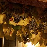 Grapes growing on eaves outside of Cabin #1