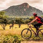 Excursions à vélo