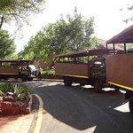 los camiones para el safari están prontos para salir