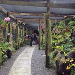 The orchid shade house