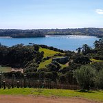 The view from Te Whau winery.