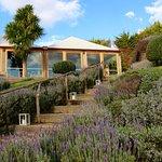 Lavender gardens around the Mudbrick Restaurant.