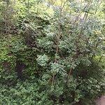 Bilde fra Scandic Holmenkollen Park