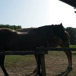 I cavalli all'ingresso