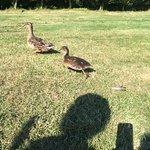 Foto di Twinlakes Park