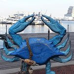 Blue Crab at Fells Point