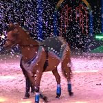Notice the horse is ready to take a bow! Magical Day!