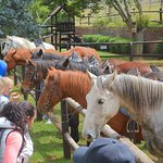 Guided Horse rides on the 400 hectare estate from 09h30 daily,booking essential inquire at Recep