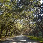 Wormsloe Historic Site Picture