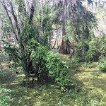 Foto de Lettuce Lake Regional Park