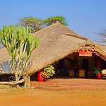 Foto di Serengeti Tented Camp - Ikoma Bush Camp