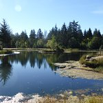 Man made pond at Seal Bay