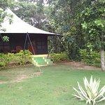 Foto di Pench Jungle Camp