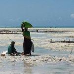 zeewier verzamelen bij eb