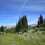 higher into alpine meadow