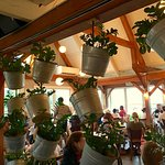 Interior, room divider of potted plants