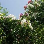 20160831_150459_large.jpg