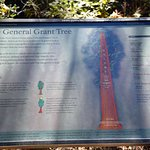 Info on the General Grant Tree