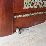 Photo of Kaliptus Hotel