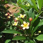 Photo de Koko Crater Botanical Garden