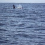 Sidney Whale Watching Foto
