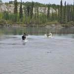 Happy Dogs at Takhini River