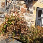 One of the dead hanging baskets 1/9/15.