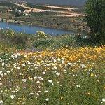Flowers at Ramskop Nature Reserve