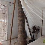 dormir avec les palmiers dans la chambre....