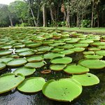 Seerosen am großen botanischen Garten
