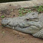 Crocodile Centre St Lucia Foto