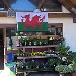 A Welsh Welcome