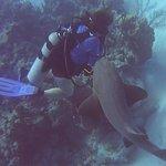 Foto de Off The Wall Dive Center & Resort