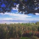 Foto di Maui Easy Riders