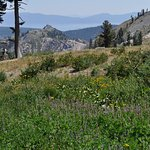 Alpine meadow with Lake Tahoe in distance