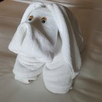 A new Towellemon invades your room each mroning
