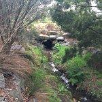 Herriotts Glen Reserve