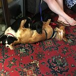 dogs sleeping in the hotel