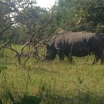 Photo of Ziwa Rhino and Wildlife Ranch