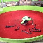 Phuket Cobra Show and Snake Farm Foto