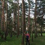 Beauty Pine Park